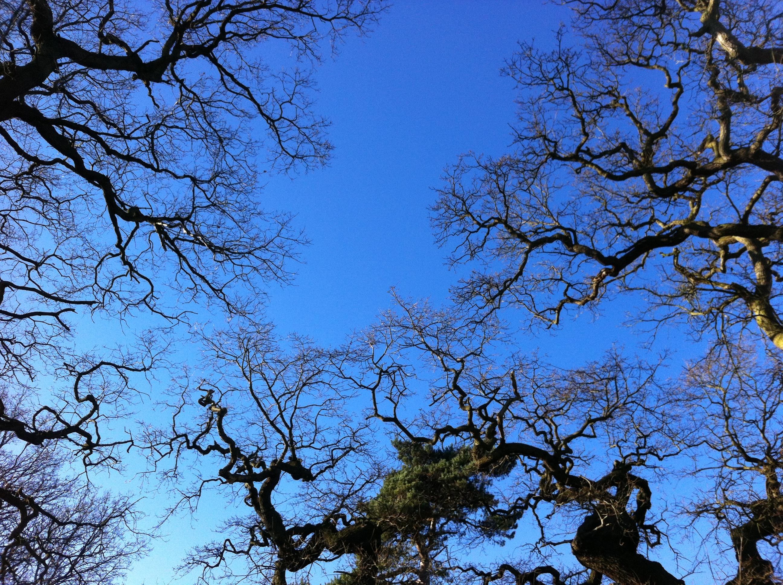 crisp blue sky.JPG